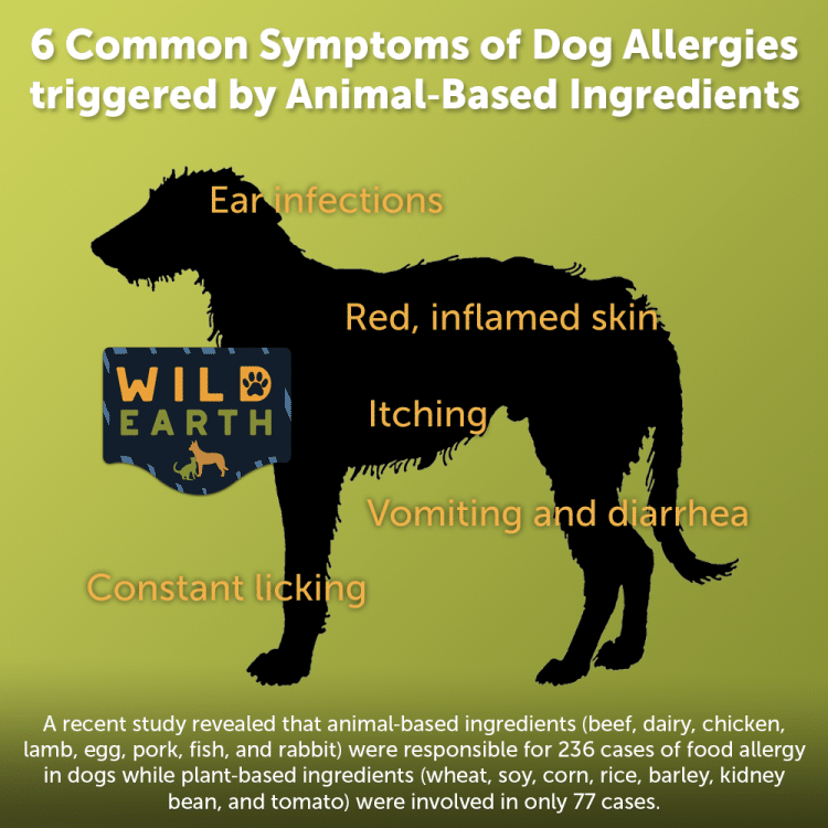 Source:    https://www.wildearthpets.com/blog/things-you-should-know-about-canine-food-allergies