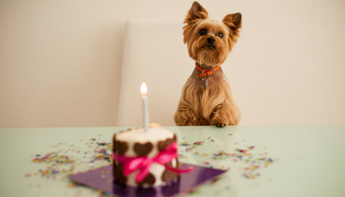 Pupcakes and pawsecco: the growing trend of luxury birthday parties for dogs!