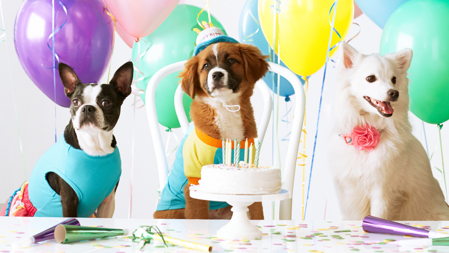 Pampered pooches: the rise of the Instagram worthy dog birthday parties