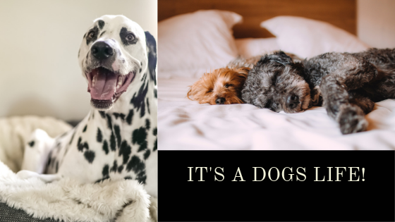 The trend for luxury dog friendly hotels in the UK looks set to stay!