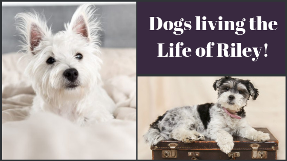 Dog owners are increasingly choosing a staycation so they can take their beloved pooches with them!
