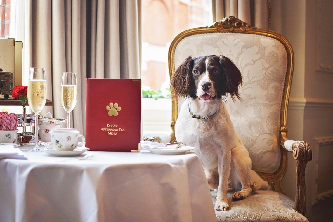 Doggy Afternoon Tea at the Egerton House Hotel, Knightsbridge, London