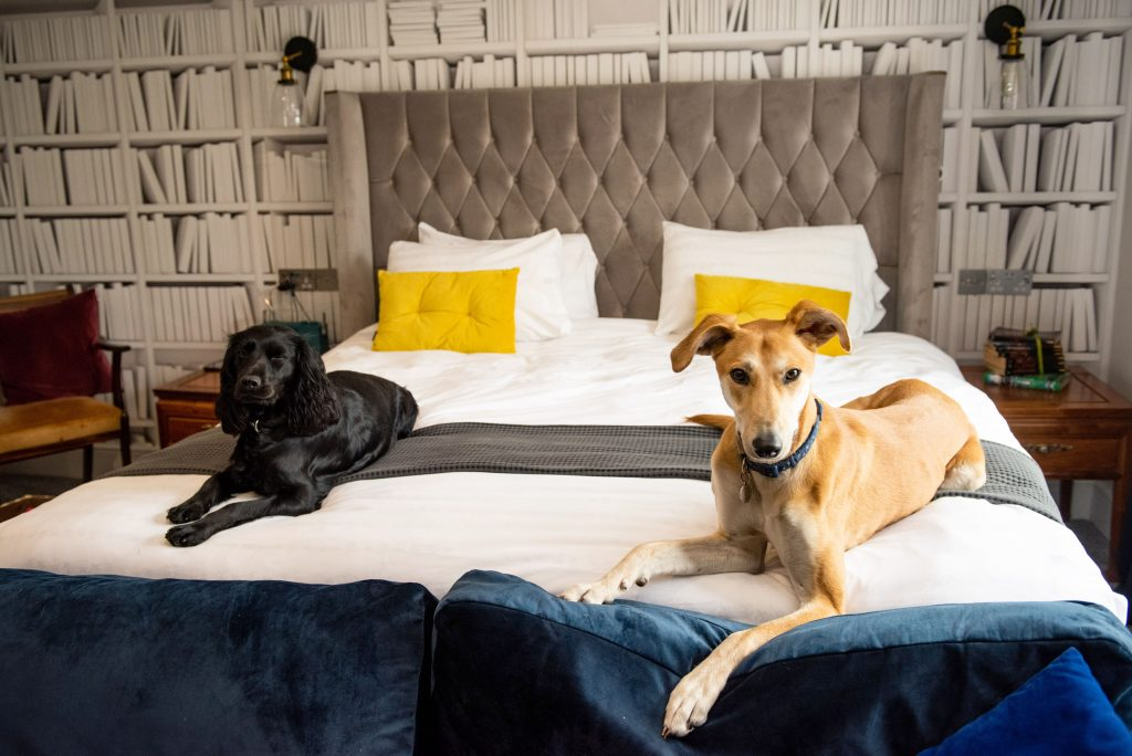This five star hotel has introduced spa packages for posh pooches – including curly blow dries, massages and pedicures. Credit: pic from Caters News.