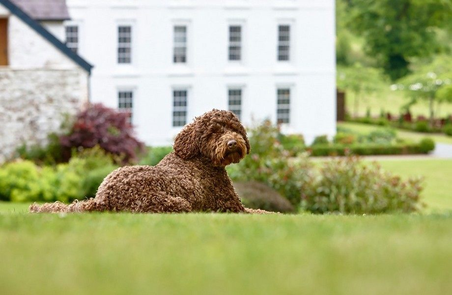 Instagram ready pooch at the Grove of Narberth!
