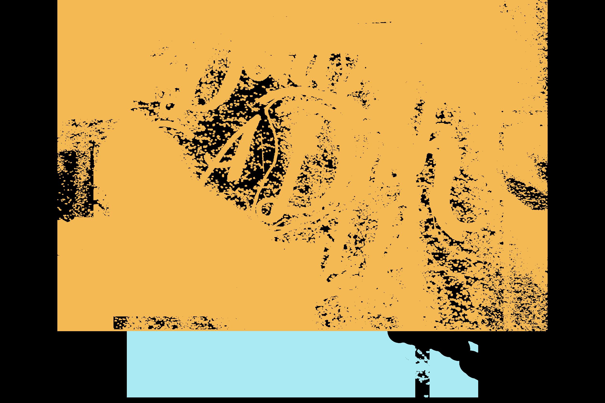 dick logo6.png