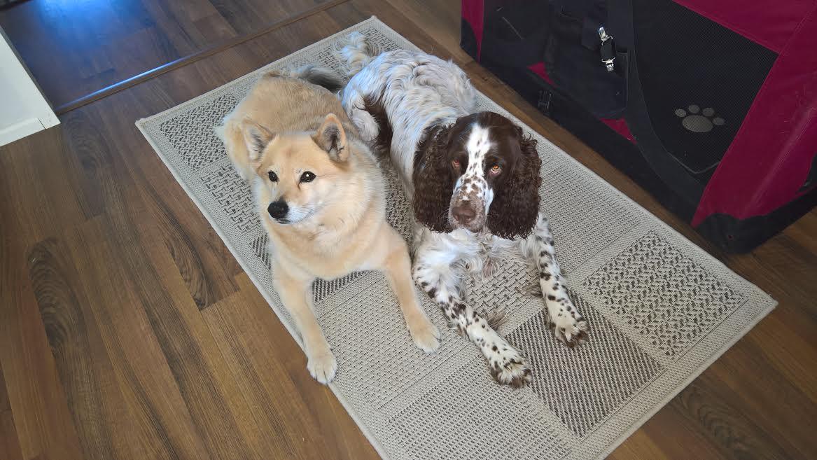 Helmi ja Ella