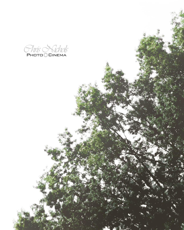 tree_white1.jpg