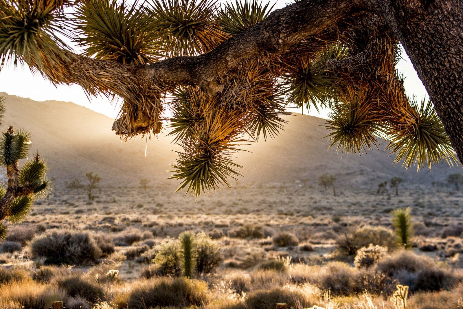 Sunset in Joshua Tree National Park