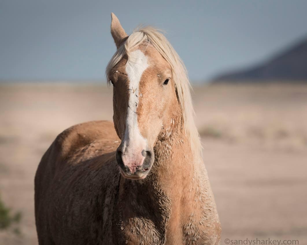 Great Basin Desert (Onaqui Mountains, Utah)