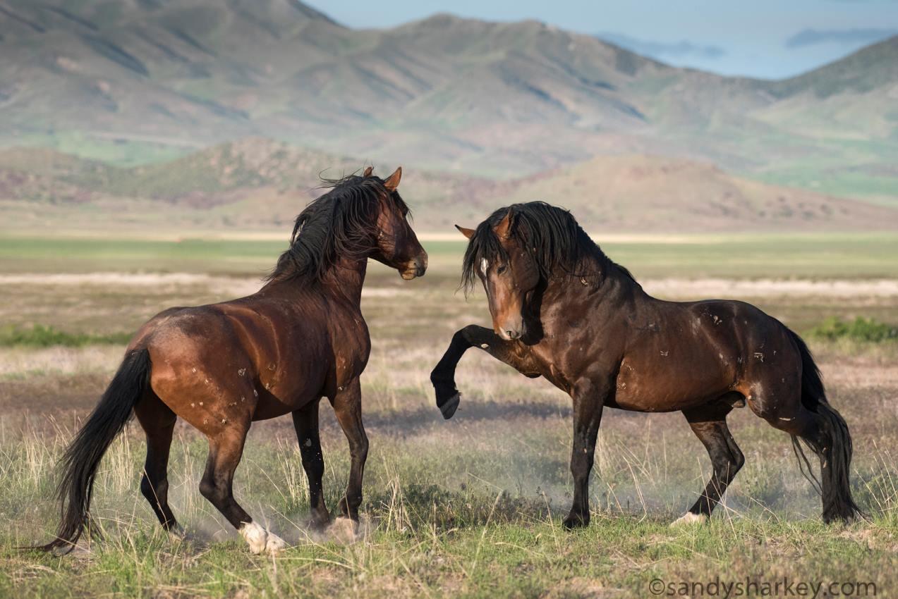 Great Basin Desert (Onaqui Mountains) Utah