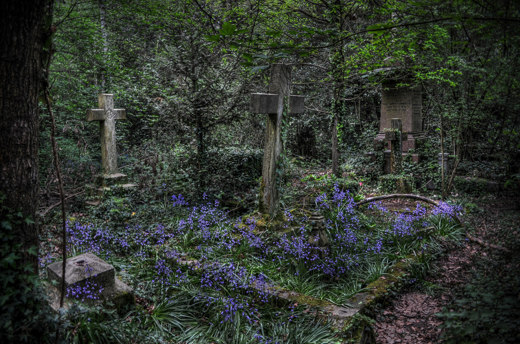 Graves - This forgotten unloved graveyard is rapidly being taken over by the trees. Most of the angels have lost their heads. Everything is ramshackle. Looks loveley