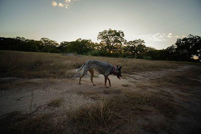 Texas 2018  #sonya7rii #photography #laowa #pup