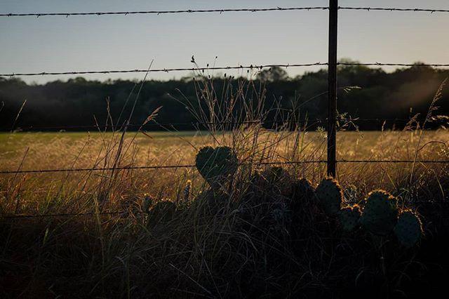 Texas 2018  #sonya7rii #a7rii #cactus #evening