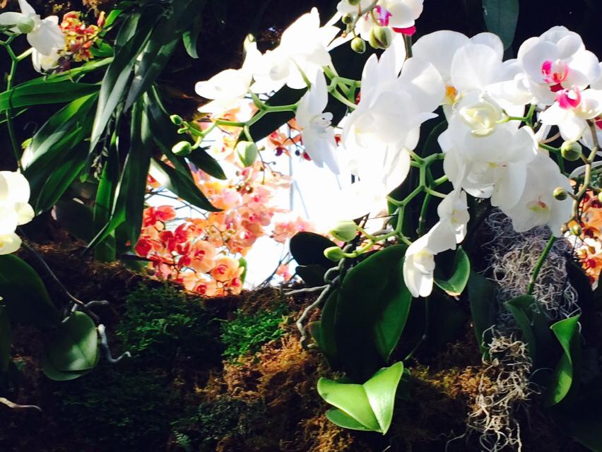 New York Botanical Garden ~ Orchids ~ In honor of Mary Francis Grenchus