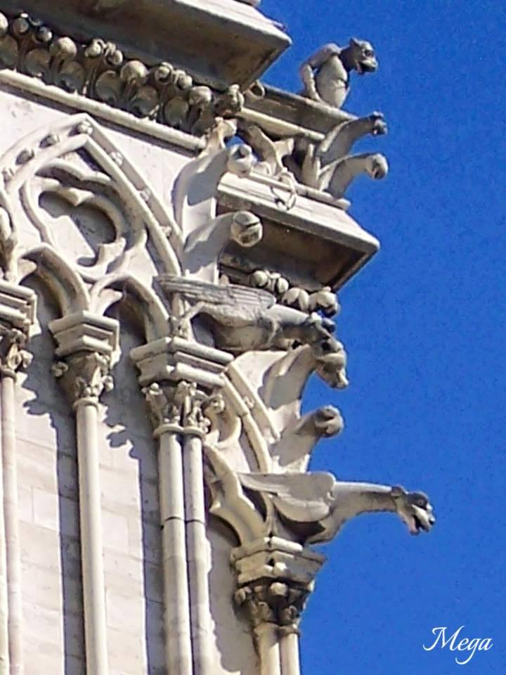 Notre Dame beauty 19.jpg