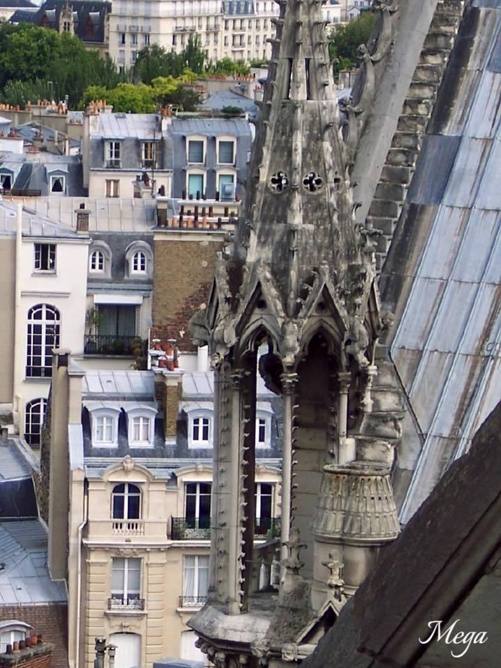 Notre Dame beauty 44.jpg