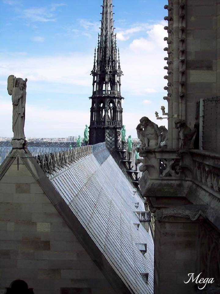 Notre Dame beauty 47.jpg