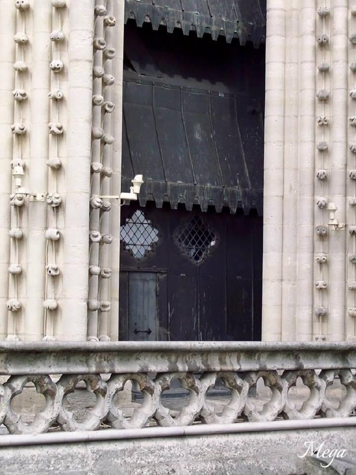 Notre Dame beauty 48.jpg