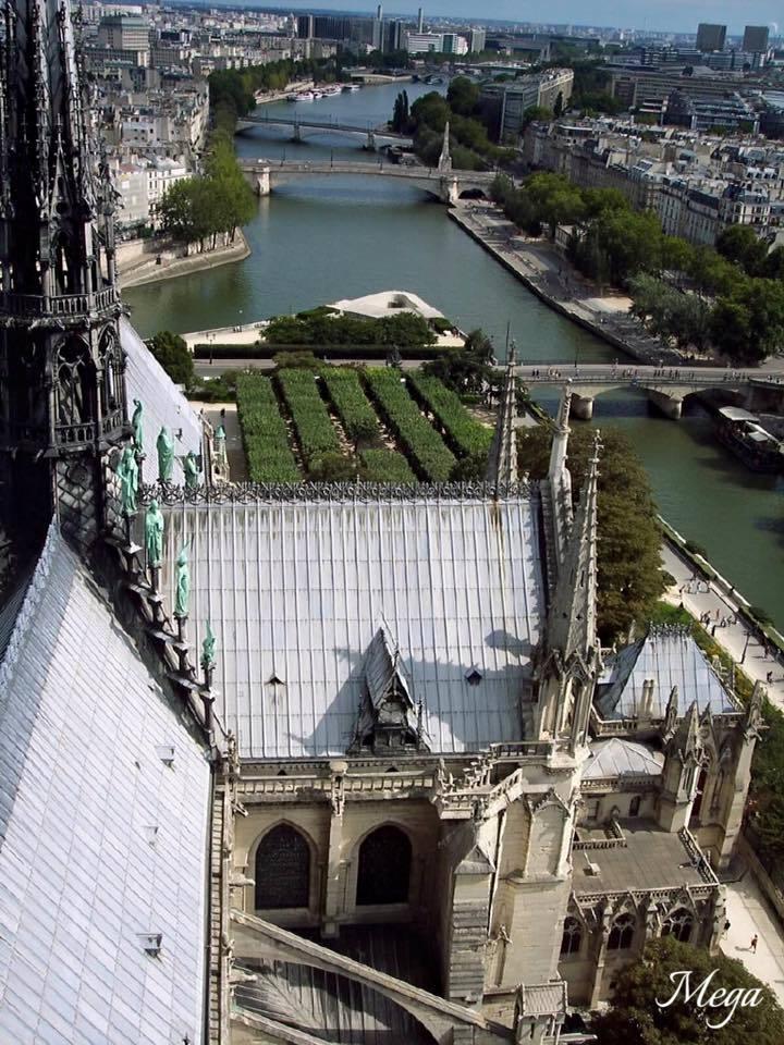 Notre Dame beauty 53.jpg