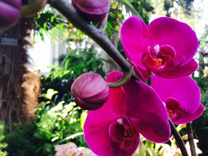 Orchids 107.jpg
