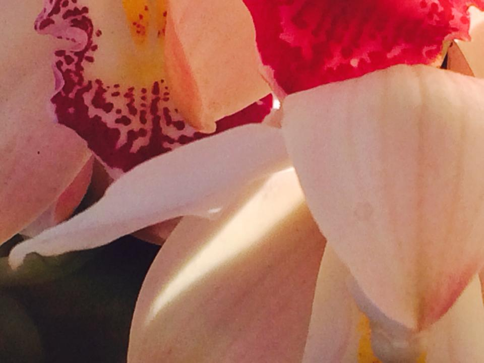Orchids 103.jpg