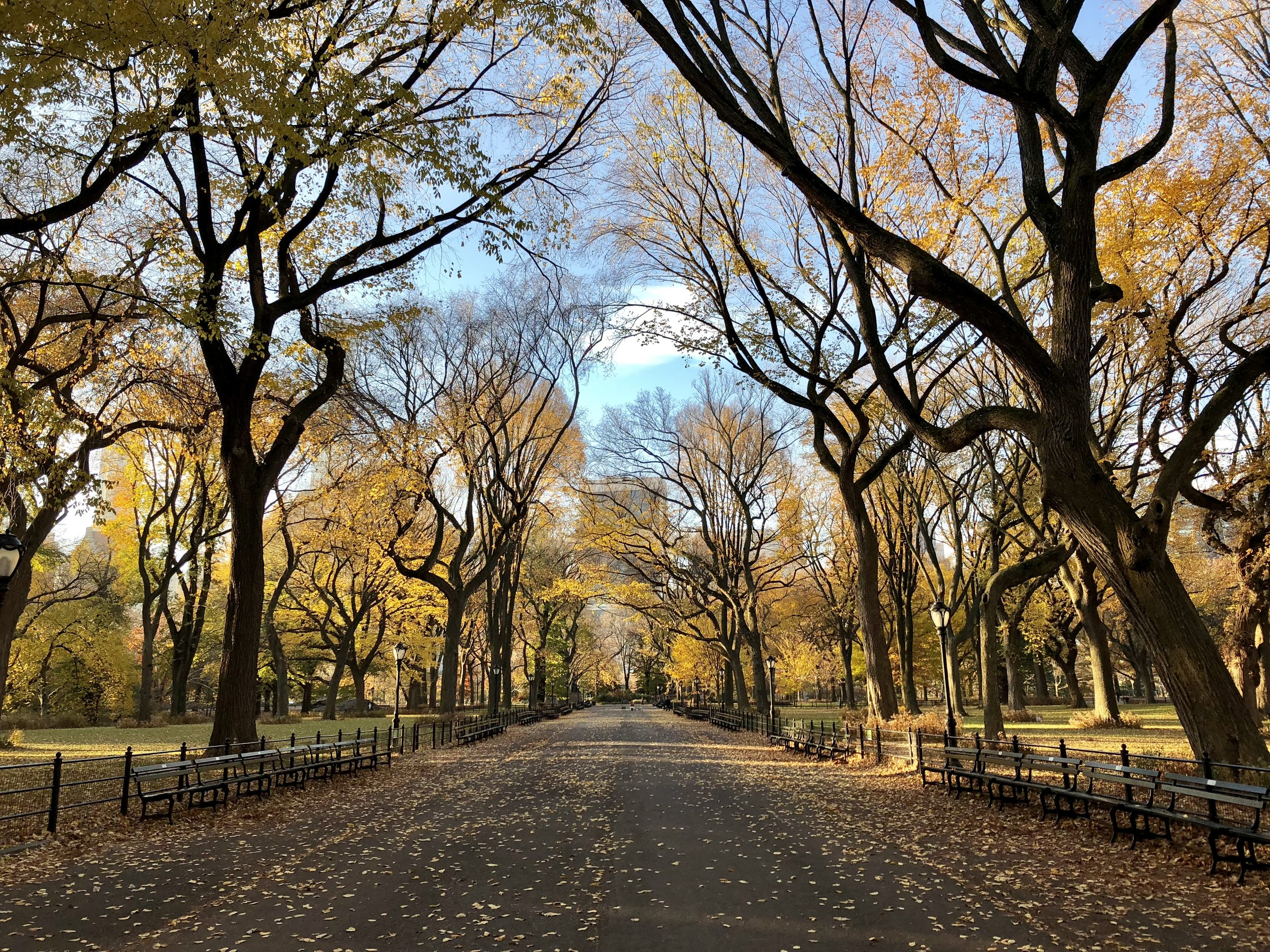 Central Park in the fall—insert swoon.