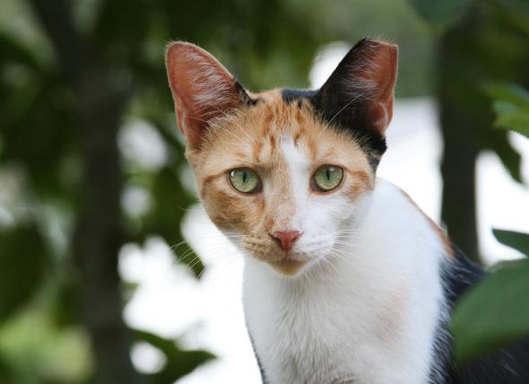 petmd-flea-tick-feral-cats.jpg