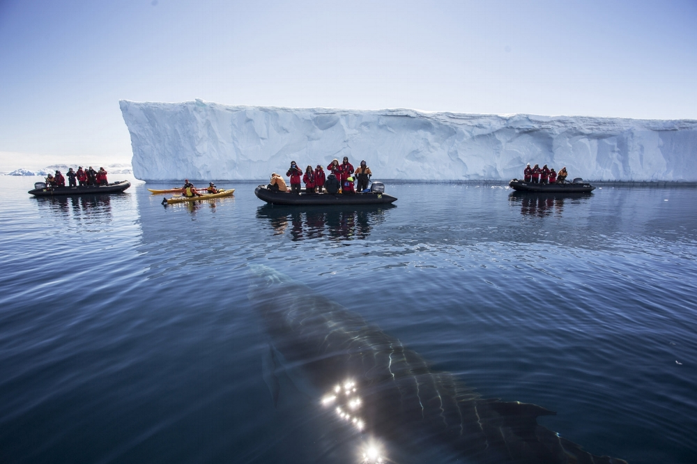 whale approaches zodiacs antarctica sunshine