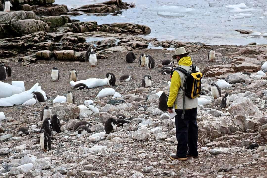 Man standing among penguins on beach Antarctica