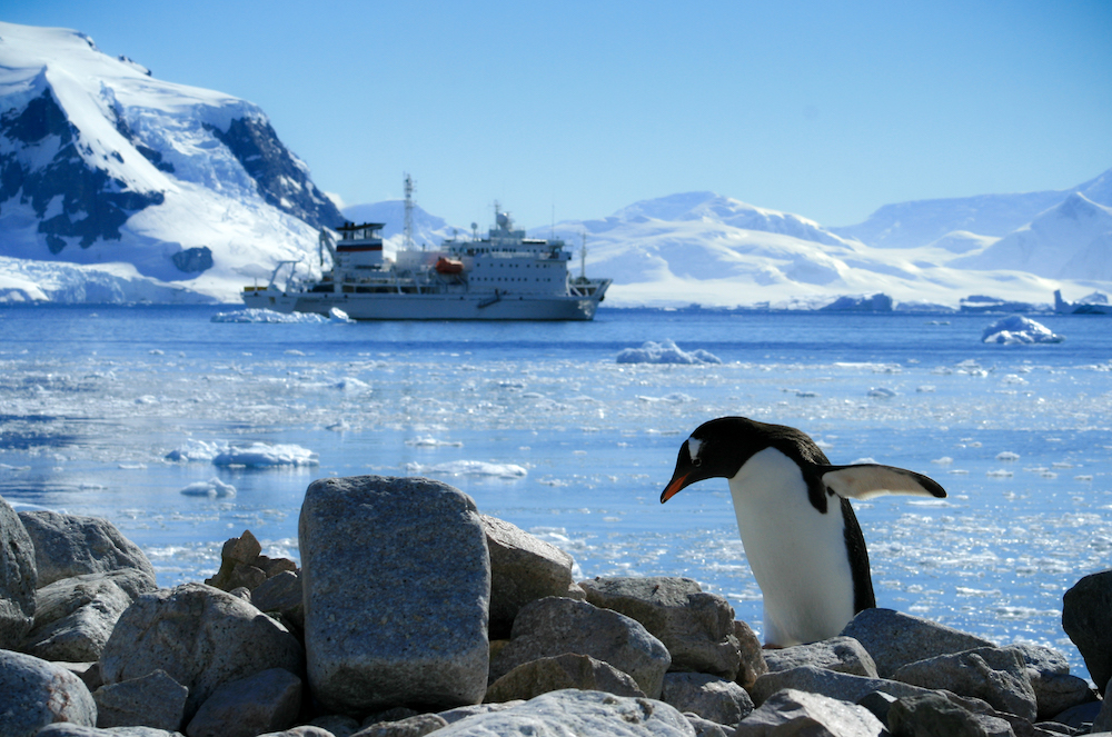 A Gentoo penguin plods along the rocky shores of Neko Harbor, Antarctica with a ship in the background.