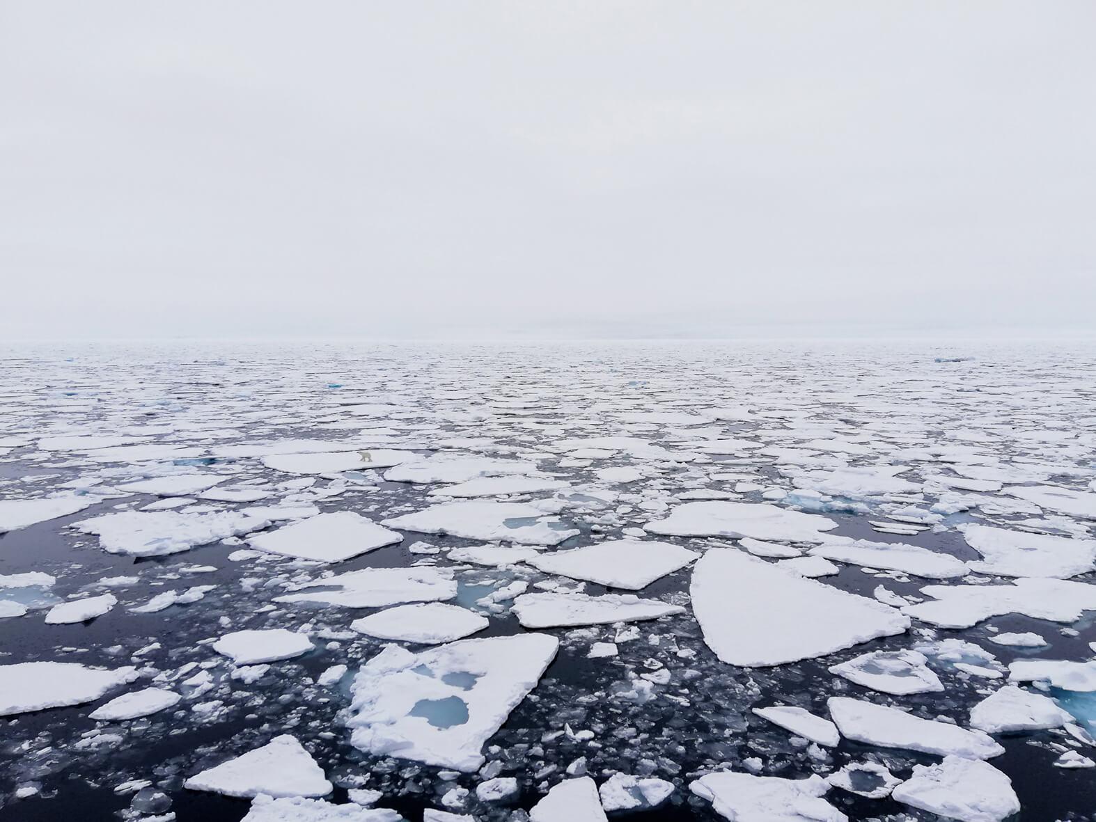 polar bear on sea ice high arctic