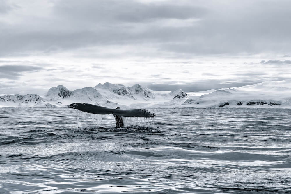 Discovering Antarctica by Sailboat