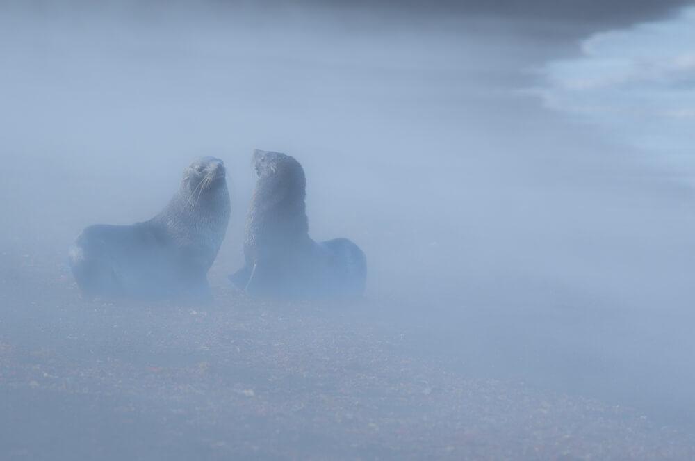 fur-seals-antarctica-craig-brown.jpg