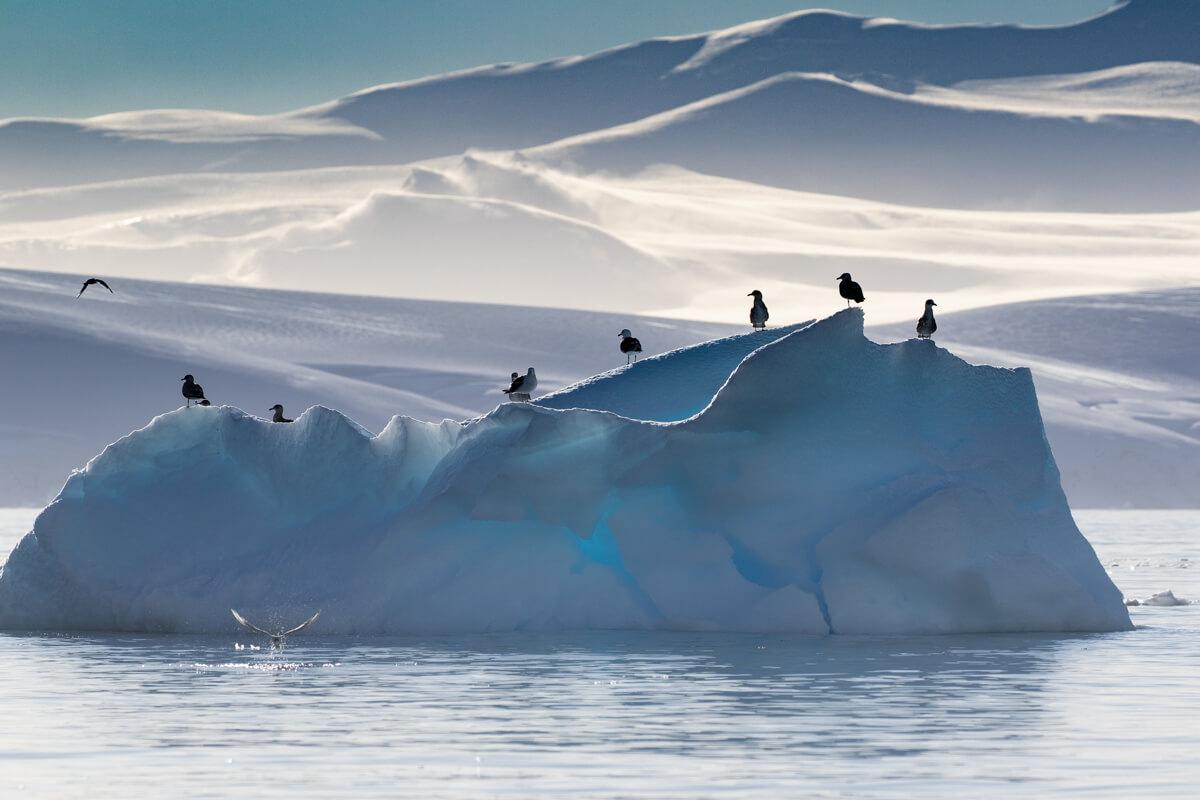 birds-on-iceberg-antarctica-craig-brown.jpg
