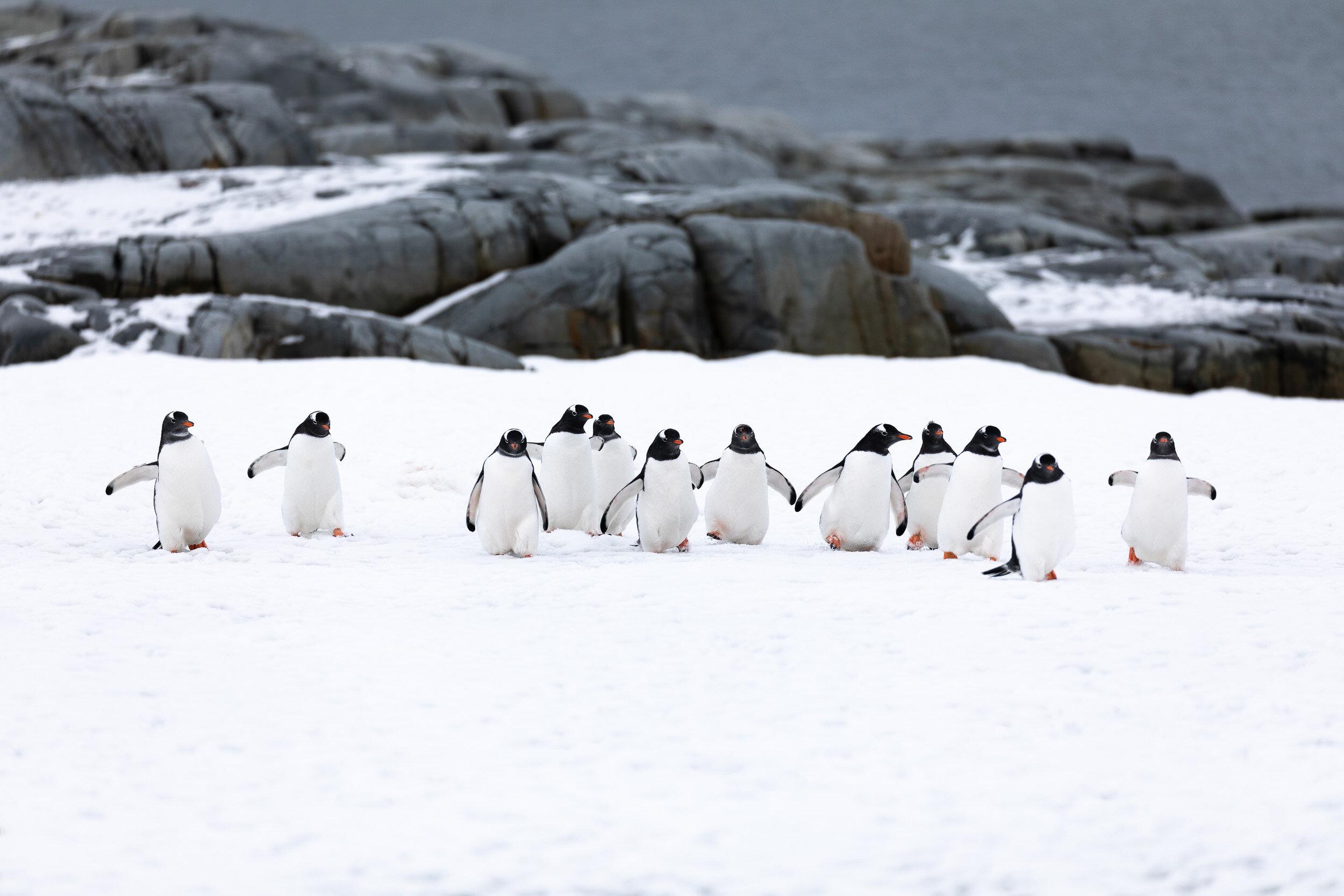 AmandaHiemstra-penguins-antarctica.jpg