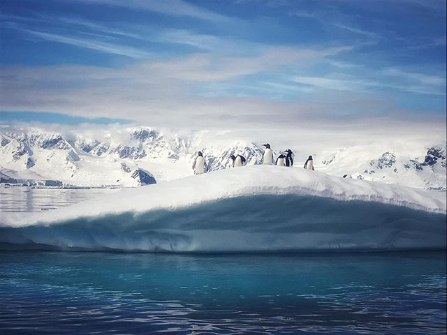 One never tires of finding penguins on ice!  Wilhelmina Bay, Antarctica.