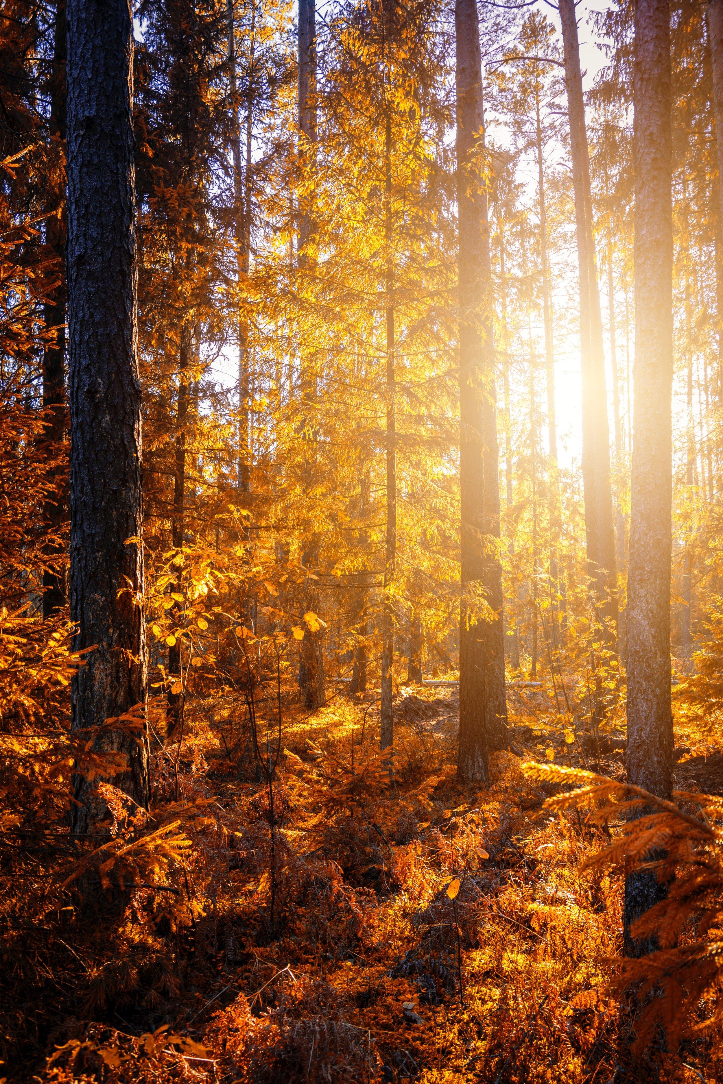 branch-bright-daylight-1496378.jpg