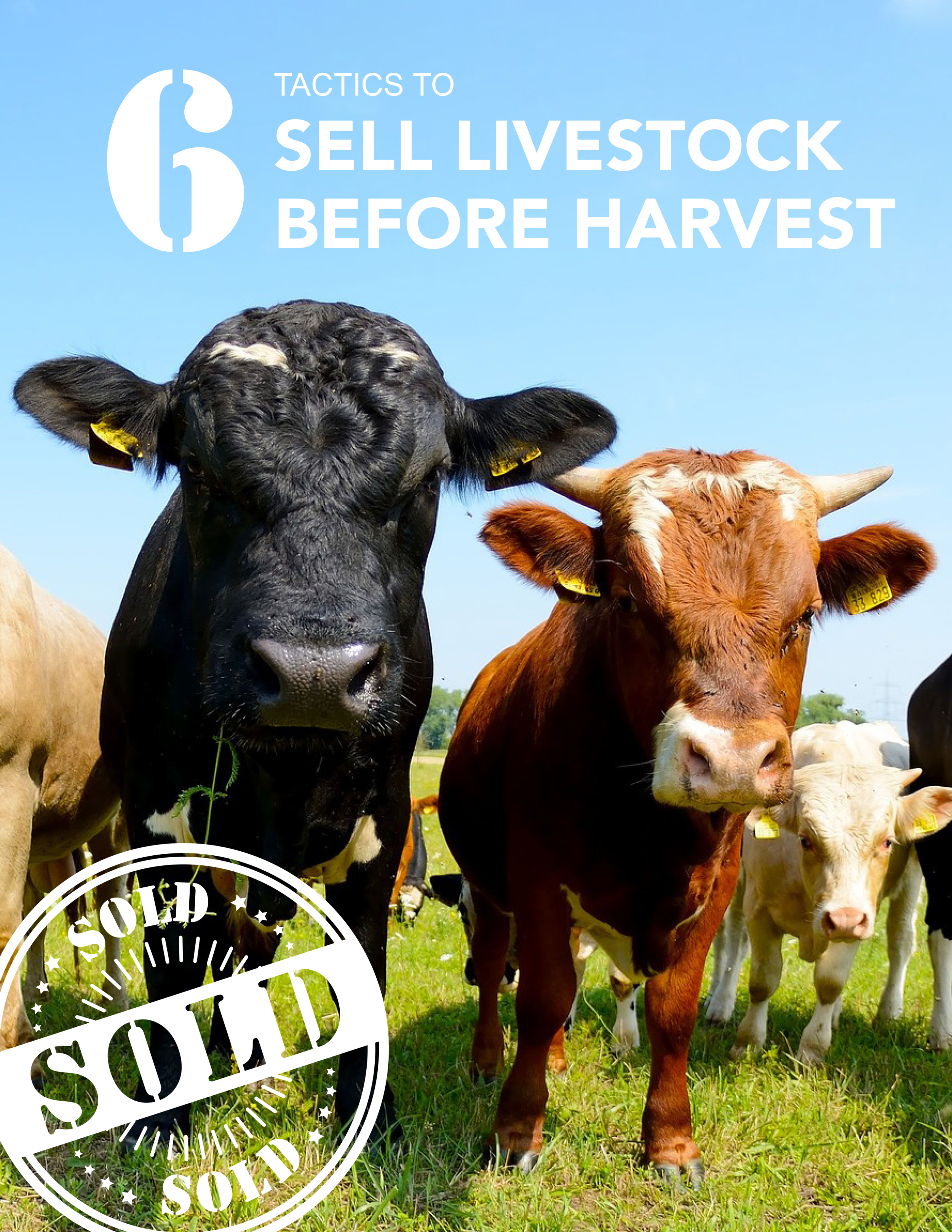 eBook 08 6 Tactics to Sell Livestock Before Harvest COVER.png