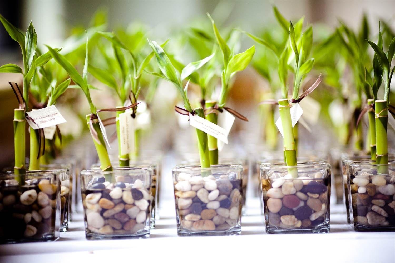 vasinhos de bambu.jpg