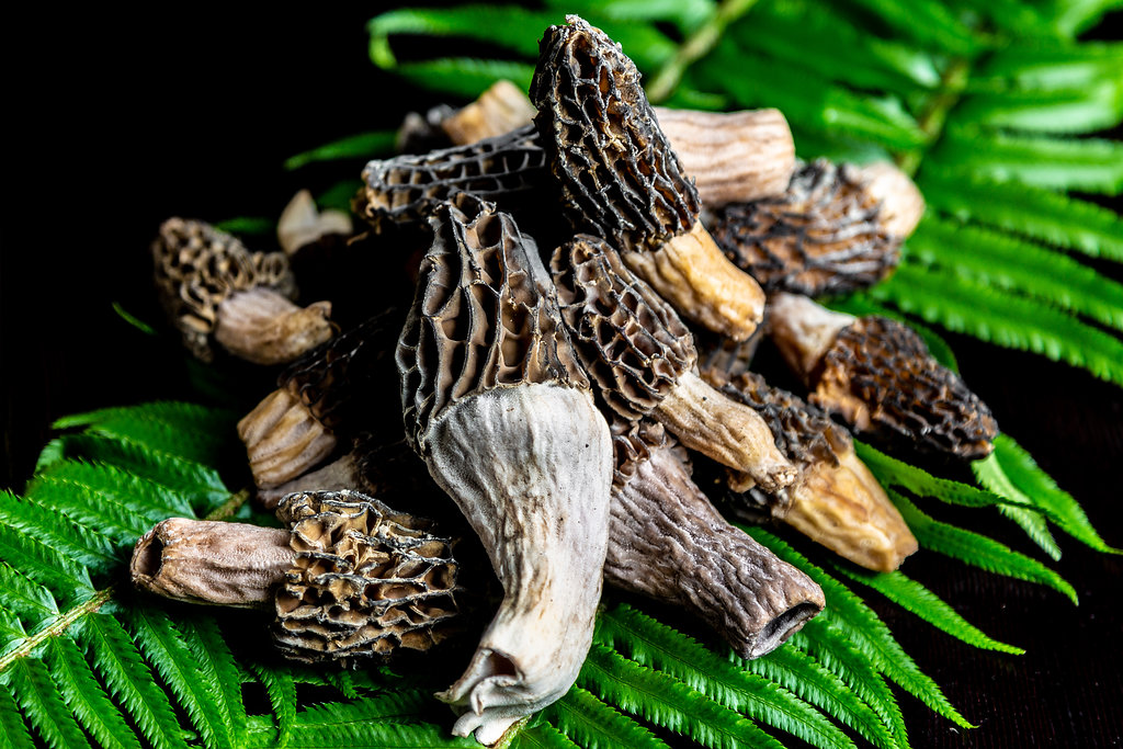 BC Morel mushrooms