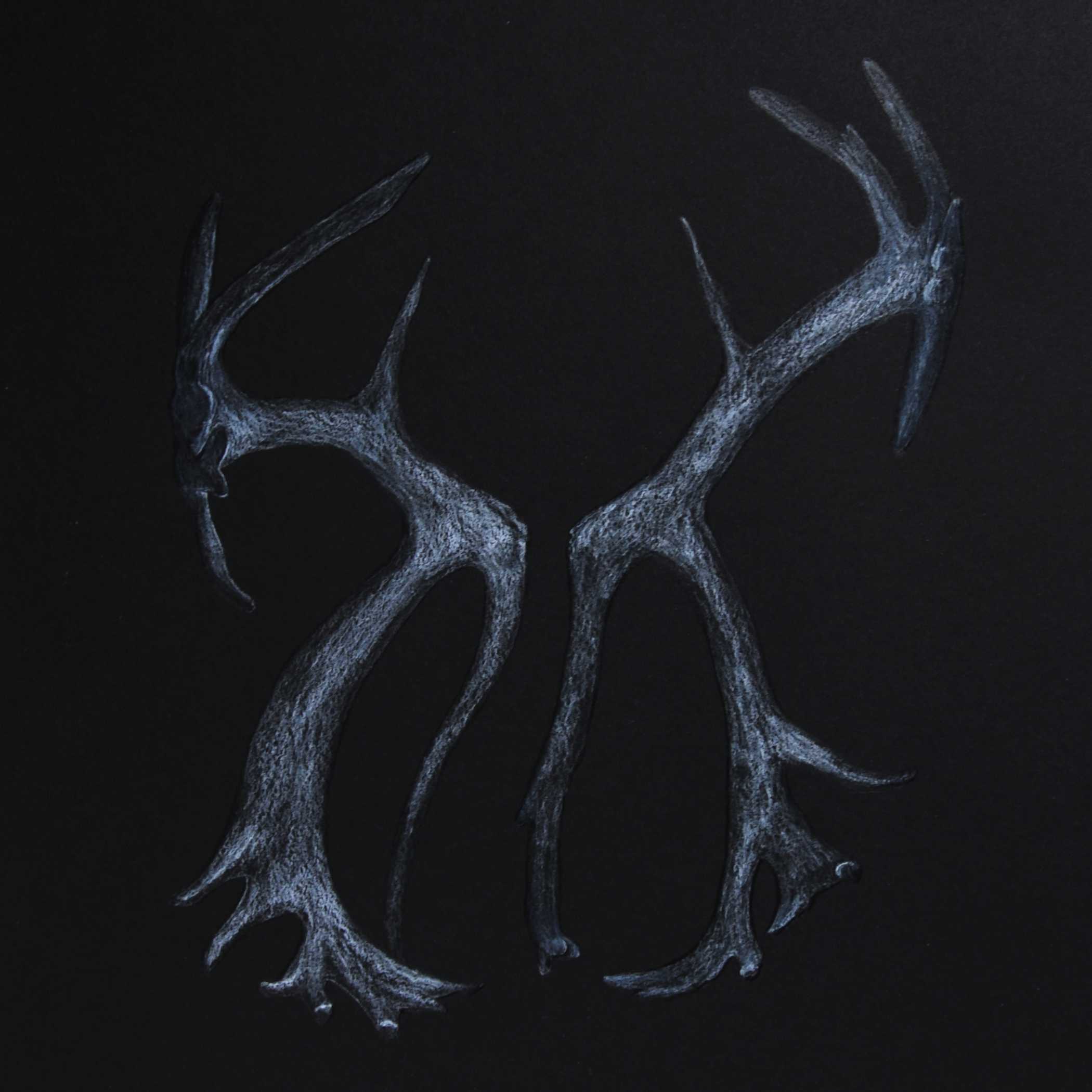 Dirty Antlers , 2018. Coloured pencil on black paper.