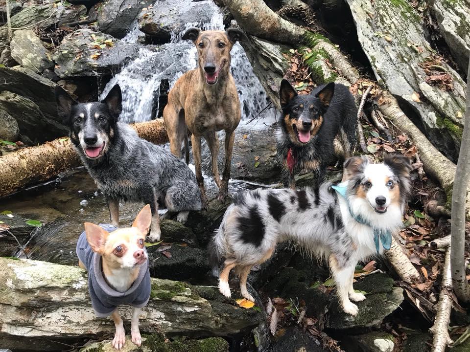 hike dogs.jpg