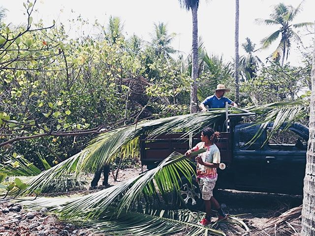 The boys gathering palm fronds for their next project. 🌴⠀⠀⠀⠀⠀⠀⠀⠀⠀ What will they build next??? 🤔⠀⠀⠀⠀⠀⠀⠀⠀⠀ -⠀⠀⠀⠀⠀⠀⠀⠀⠀ #sourcelocal #vivirsalvaje #junglelife #junglelove #sustainableliving #ecoretreat #yogaretreat #veganretreat #veganfriendly #vidaasana #playahermosa #costarica #puravida