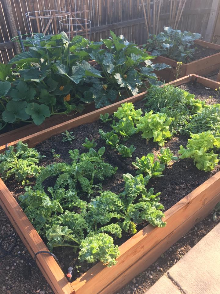 Garden Boxes 2.jpg