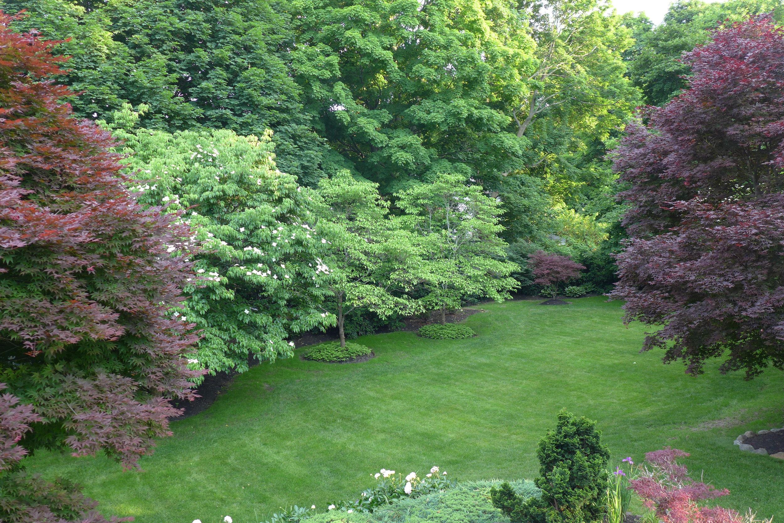 Lower yard from verandah.jpg