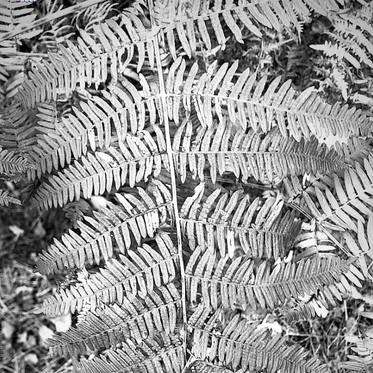 fern #patternspotting.jpg