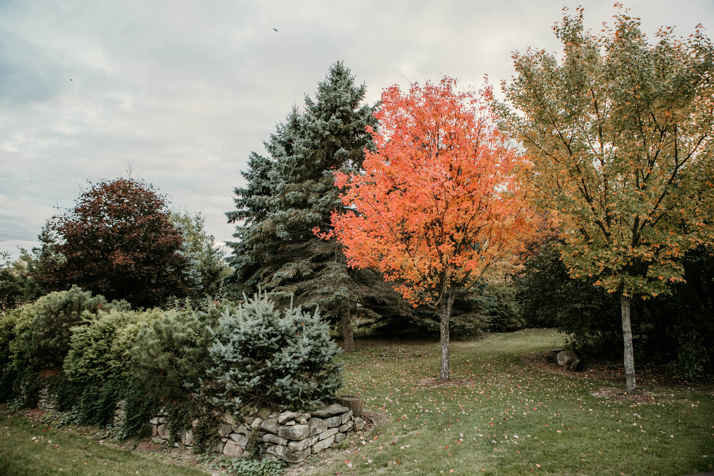 Autumnal vibes at Riverwood Gardens