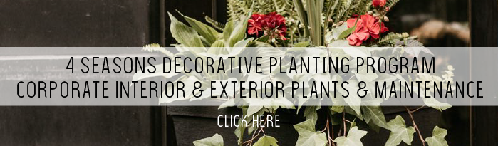 Decorative planting program — corporate interior and exterior plants and maintenance