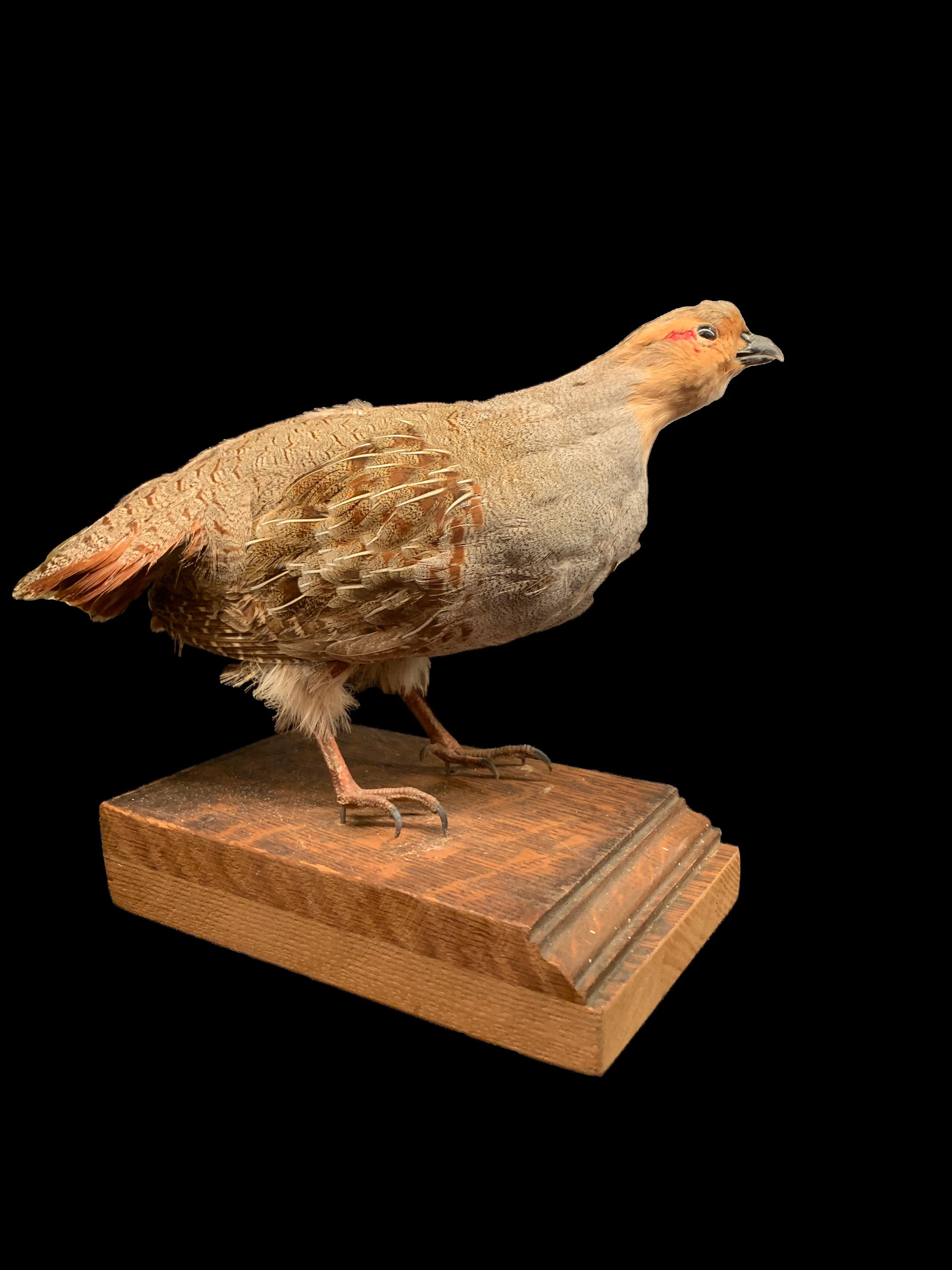 quail_web.png