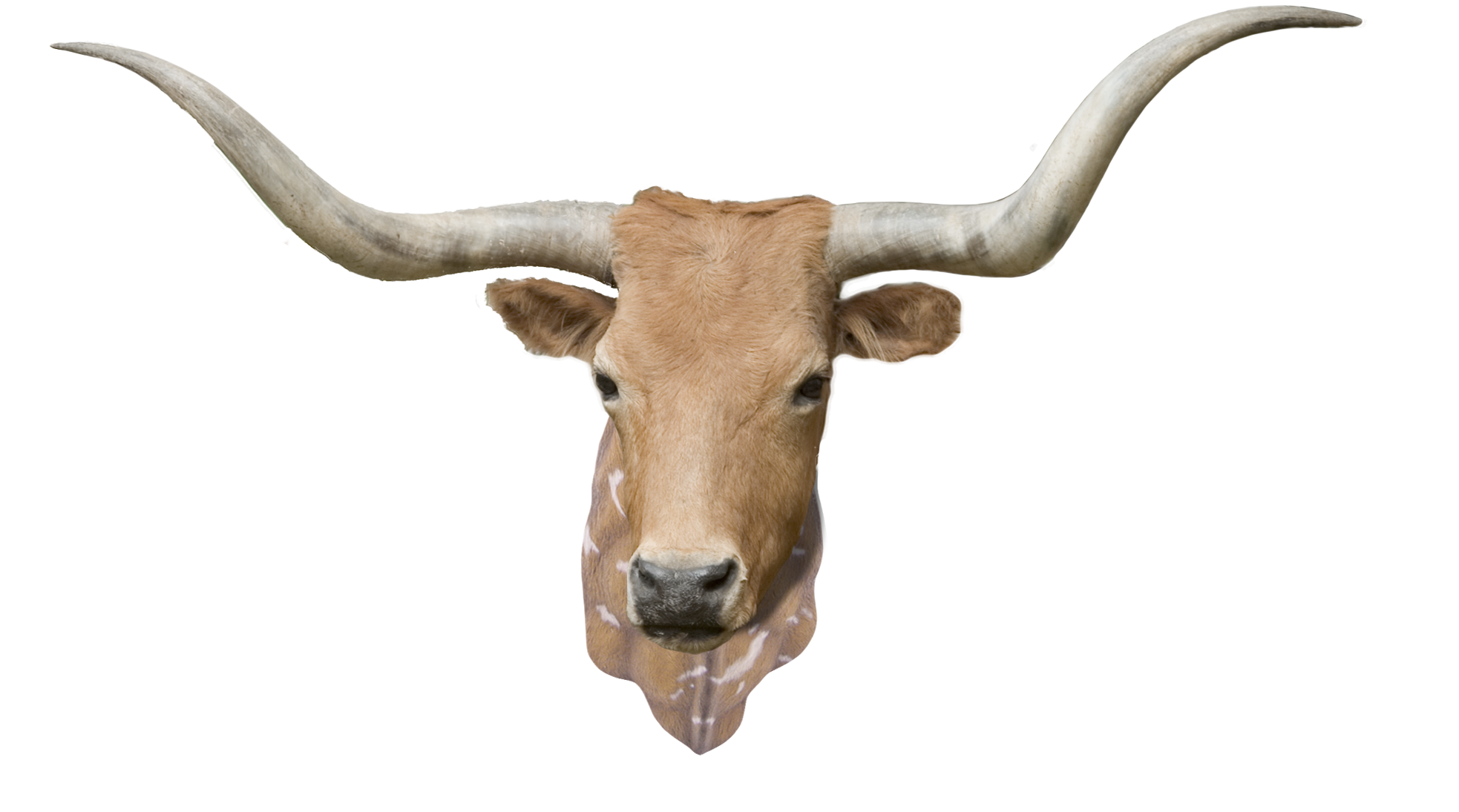 CowwithNeck.png